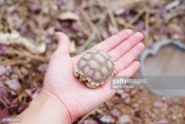 A woman holding baby turtle