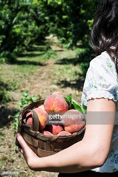 Woman holding basket with peaches in orchard