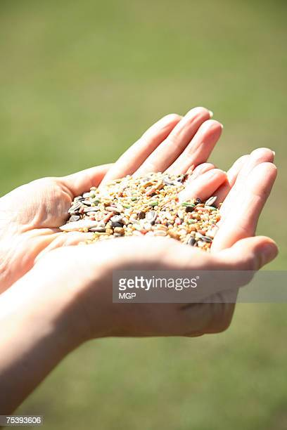 Woman holding bird seed, close-up of hands