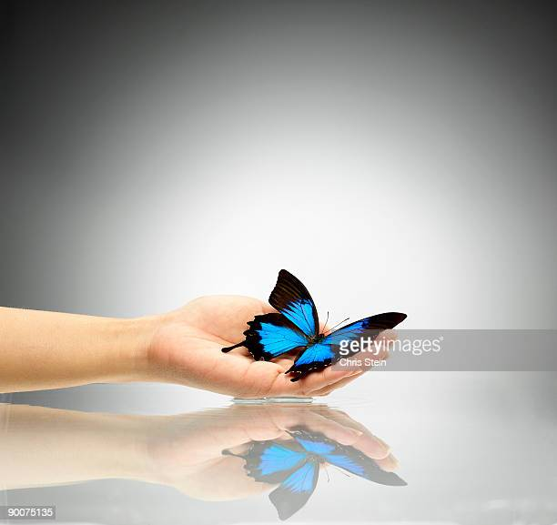 woman holding blue butterfly - ulysses butterfly stock pictures, royalty-free photos & images