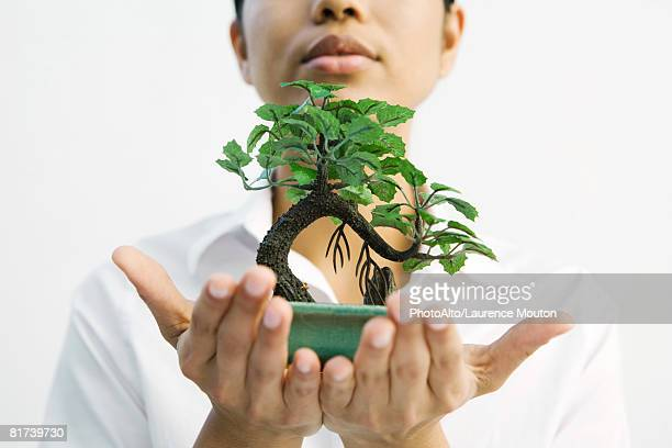 woman holding bonsai tree out in hands - bonsai tree stock pictures, royalty-free photos & images