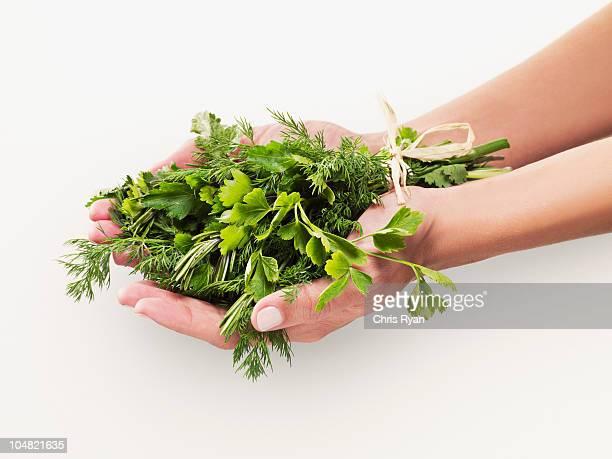 woman holding bouquet of herbs - peterselie stockfoto's en -beelden
