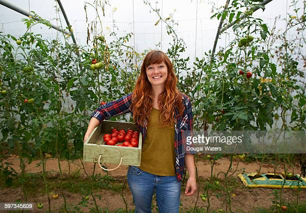 Woman holding box of fresh tomatoes in poly tunnel