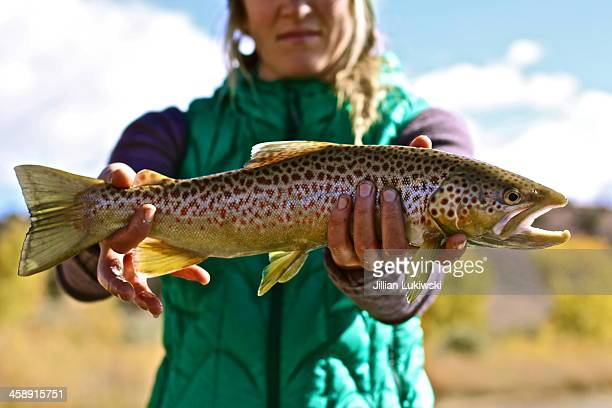woman holding brown trout - brown trout stock pictures, royalty-free photos & images