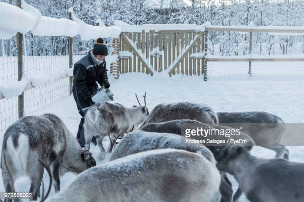 Woman Holding Bucket By Reindeer At Farm