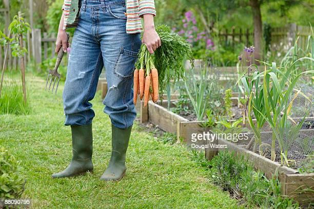 woman holding bunch of carrots in garden. - bottes photos et images de collection