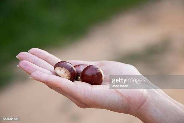 Woman holding Chestnuts (Castanea sativa)