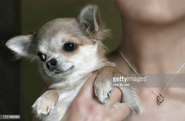 Woman holding chihuahua dog.