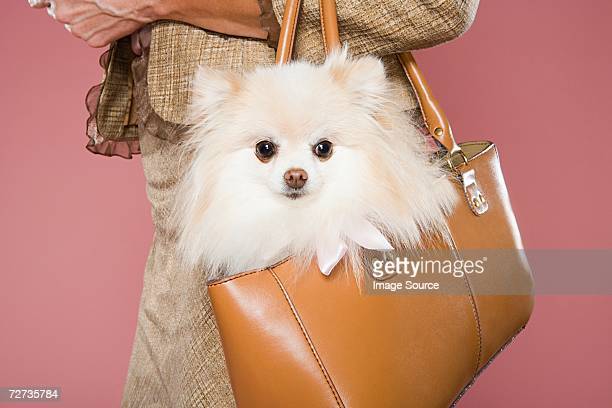 woman holding dog in a handbag - clutch bag stock pictures, royalty-free photos & images