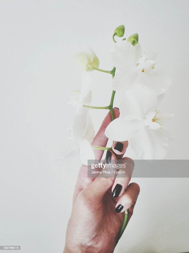 Woman Holding Flower : Foto stock