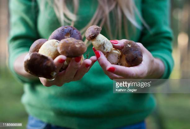 woman holding freshly harvested porcini mushrooms, close-up of hands - mushrooms stock pictures, royalty-free photos & images