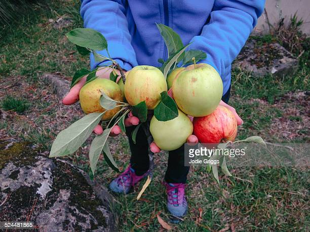 Woman holding handful of freshly picked apples