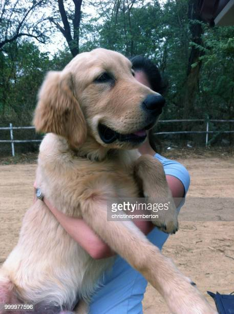 woman holding her 5 month old golden retriever puppy - モバイル撮影 ストックフォトと画像