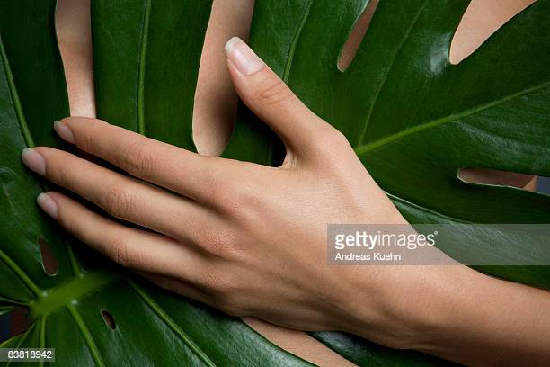 woman holding leaf in front of chest, cropped. - beautiful woman chest stock pictures, royalty-free photos & images