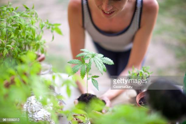 woman holding marijuana plant - medical cannabis stock photos and pictures