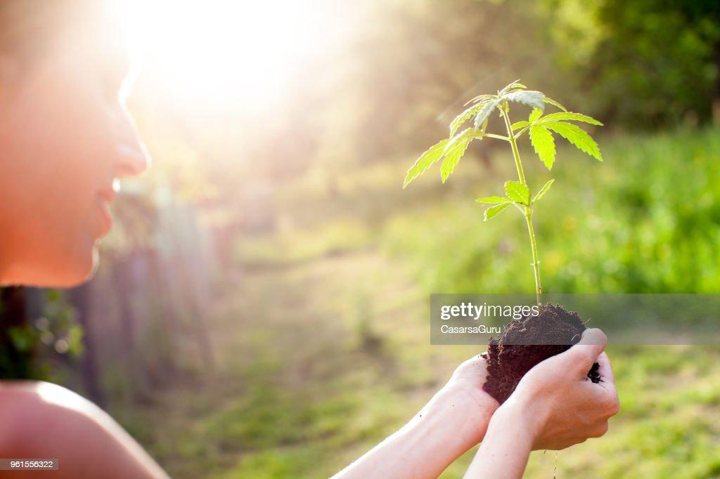 Mujer que sostiene la planta de marihuana : Foto de stock