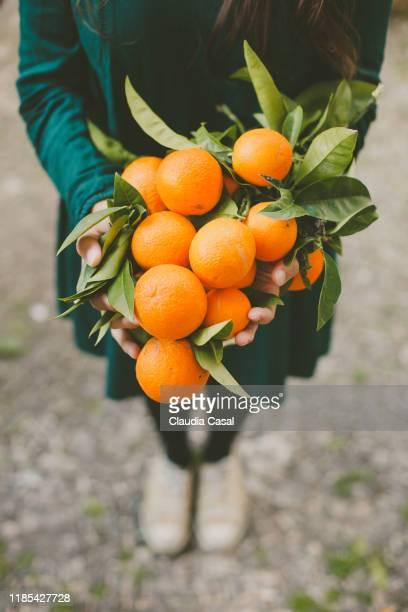 woman holding oranges from the orange tree - orange farm - fotografias e filmes do acervo