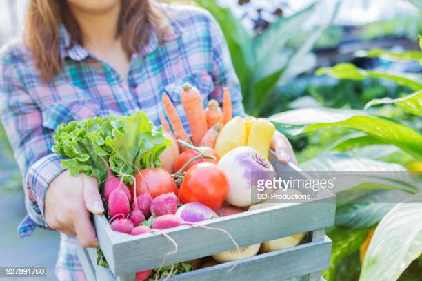 woman holding out basket of fresh organic produce - rutabaga stock pictures, royalty-free photos & images