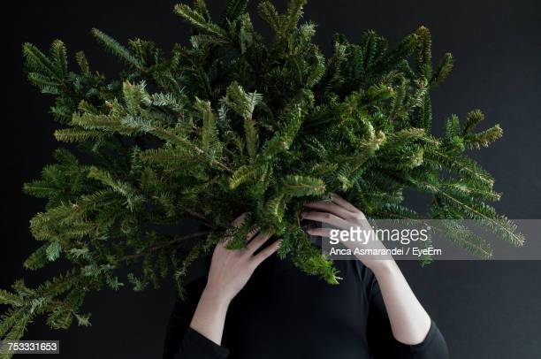 woman holding pine tree branches against black background - abeto fotografías e imágenes de stock