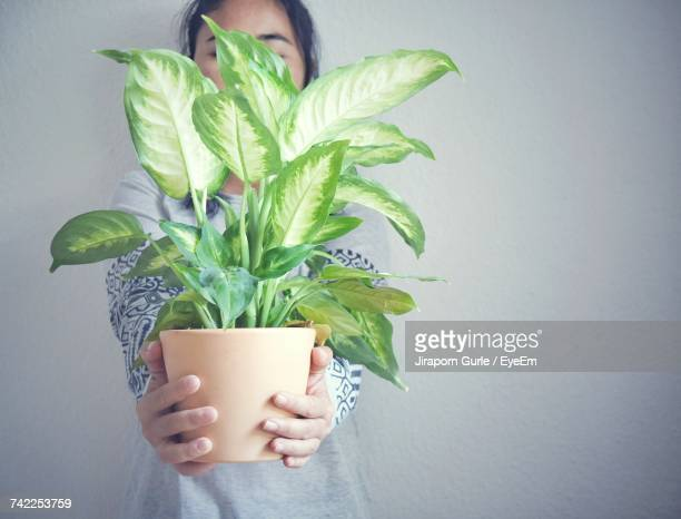 woman holding plant - plant pot stock pictures, royalty-free photos & images