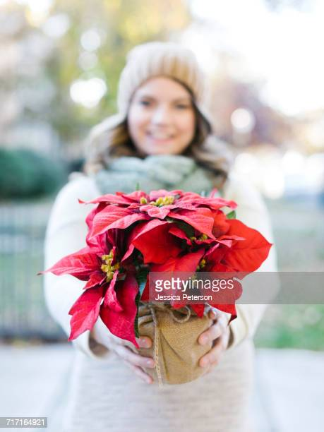 woman holding poinsettia - christmas star stock photos and pictures