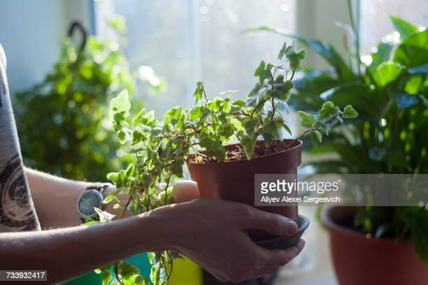 Woman holding potted plant, close-up