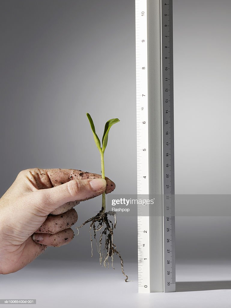 Woman holding seedling against ruler, close-up of hand : Foto stock