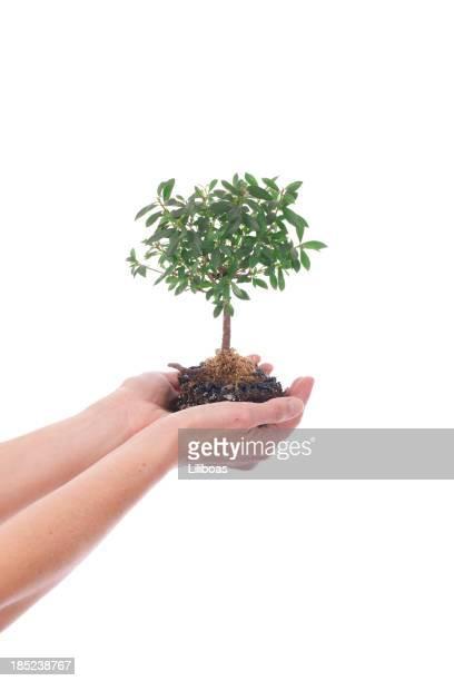 Femme tenant un petit arbre
