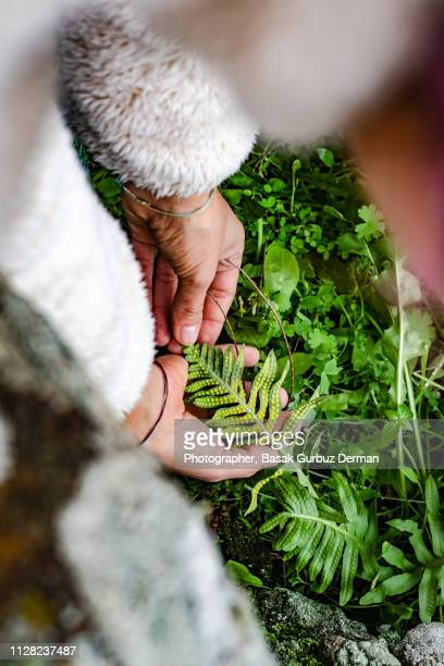a woman holding the leaf with spores on it. - botanist stock pictures, royalty-free photos & images
