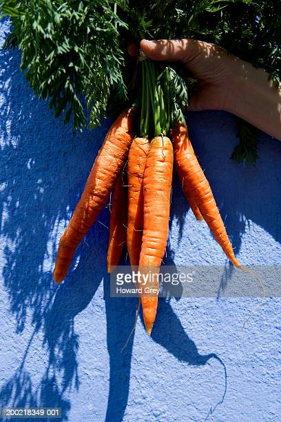 Woman holding up bunch of carrots, close-up
