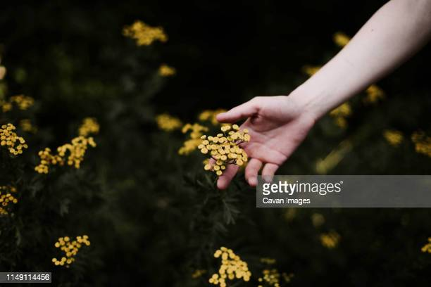 woman holding wild yellow flowers . - bush stock pictures, royalty-free photos & images