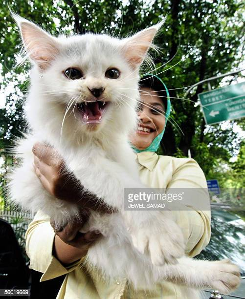 A woman holds a cat before buying it from a street side pet stall in Jakarta 27 October 2005 Indonesia's human bird flu outbreak is puzzling experts...