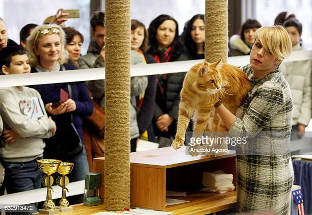 Woman holds a cat in her arms during the International Cat Show in Kiev, Ukraine, on January 28, 2017.The show presents more than 20 breeds of cats,...