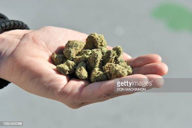 Woman holds a handful of marijuana flower buds, in Vancouver, Canada, on October 2018. - Nearly a century of marijuana prohibition came to an end...