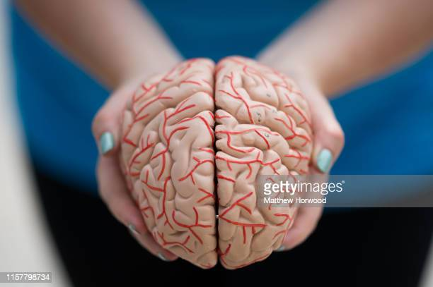 A woman holds a model of a human brain in her hands on June 1 2019 in Cardiff United Kingdom
