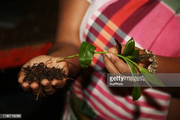 Woman holds fresh tea leaves and roasted tea leaves at the Geragama Tea Factory in Pilimathalawa, Sri Lanka. Geragama is one of the premium and the...