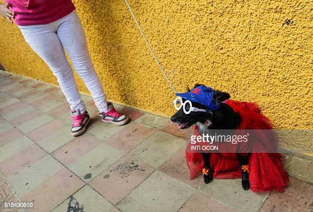 A woman holds her fancy dressed dog during the Saint Lazarus festival on March 13 at the Santa Maria Magdalena parish in Masaya 30 km south of...