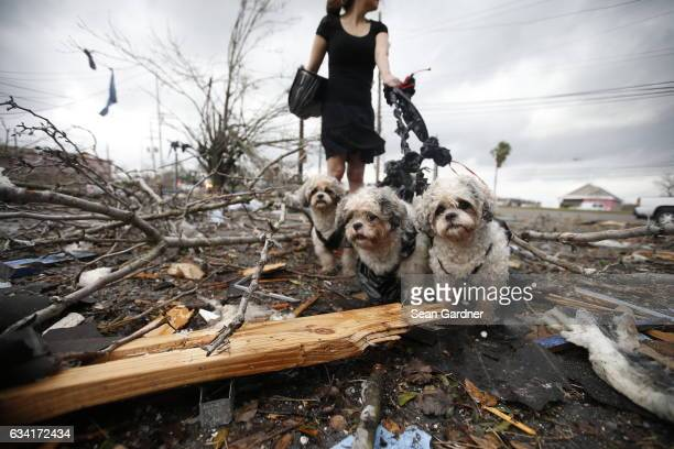 A woman holds three dogs by a makeshift leash amongst the debris left behind by a tornado on February 7 2017 in New Orleans Louisiana According to...
