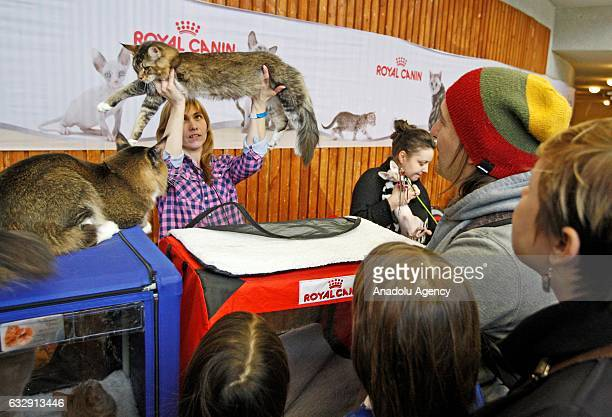 Woman holds up a cat during the International Cat Show in Kiev, Ukraine, on January 28, 2017.The show presents more than 20 breeds of cats, including...
