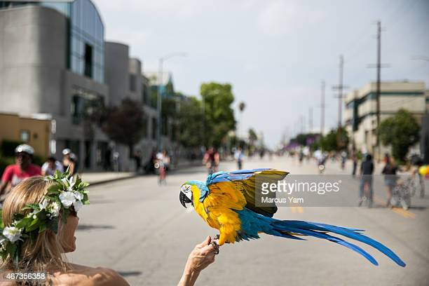 A woman holds up her Blueandyellow macaw parrot to catch the wind at the CicLAvia bike festival in Studio City Calif on March 22 2015