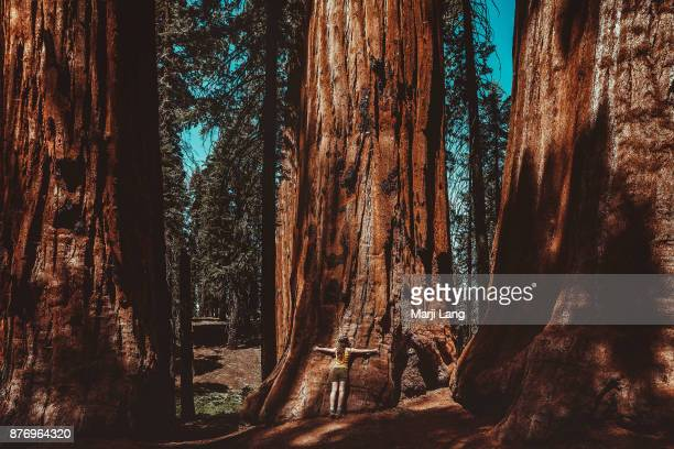 Woman hugging a giant sequoia in the forest Sequoia National Park California USA