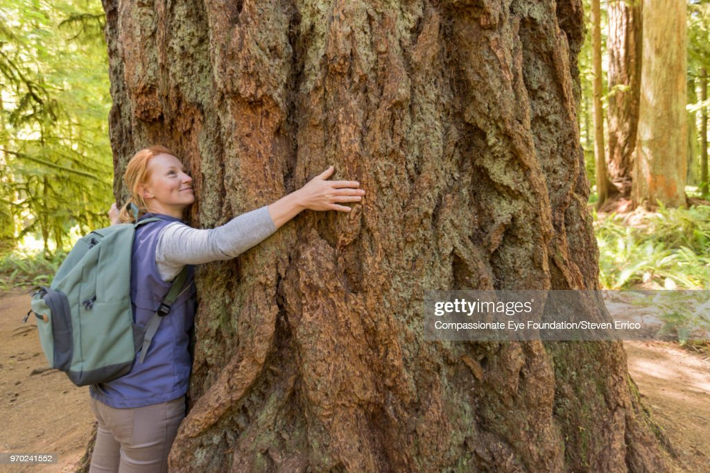 Woman hugging large tree in forest : Stock Photo