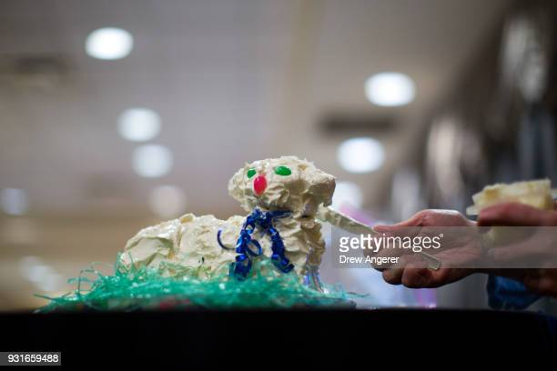 A woman ices a cake that is shaped like a lamb at an election night event for Conor Lamb Democratic congressional candidate for Pennsylvania's 18th...