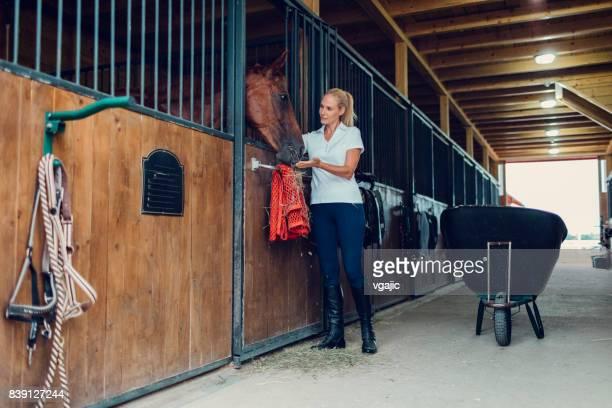 mulher em um celeiro com seu cavalo - thoroughbred horse - fotografias e filmes do acervo