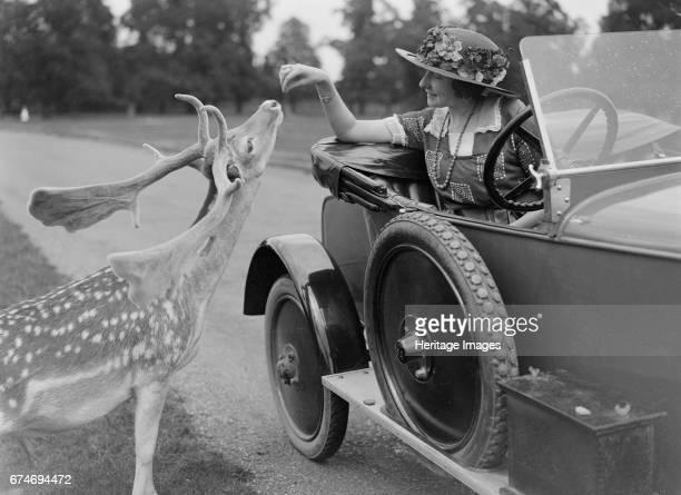 Woman in a BSA car feeding a deer in Richmond Park Surrey circa 1920s Artist Bill Brunell