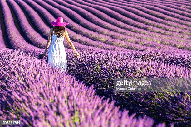 woman in a lavender field in full bloom, provence, france - multi colored hat stock pictures, royalty-free photos & images