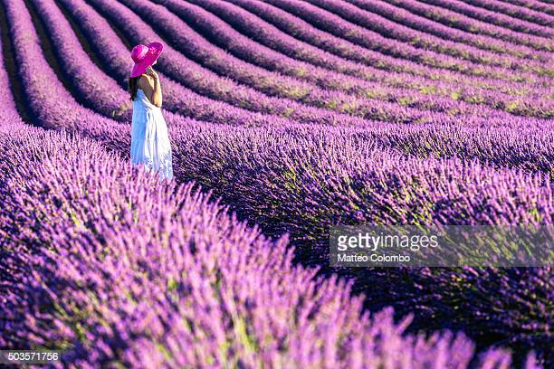 woman in a lavender field in full bloom, provence, france - long dress stock pictures, royalty-free photos & images