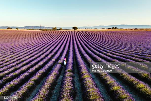 woman in a lavender field in provence, france - france stock pictures, royalty-free photos & images