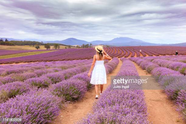 woman in a lavender field - tasmania stock pictures, royalty-free photos & images