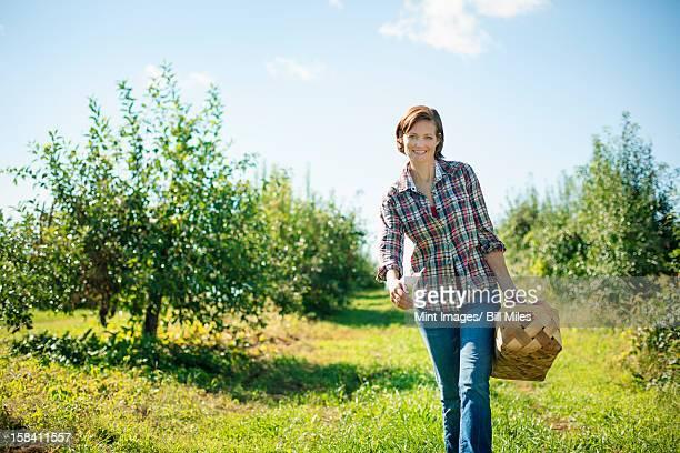 Uma mulher em uma camisa xadrez escolher maçãs no Pomar